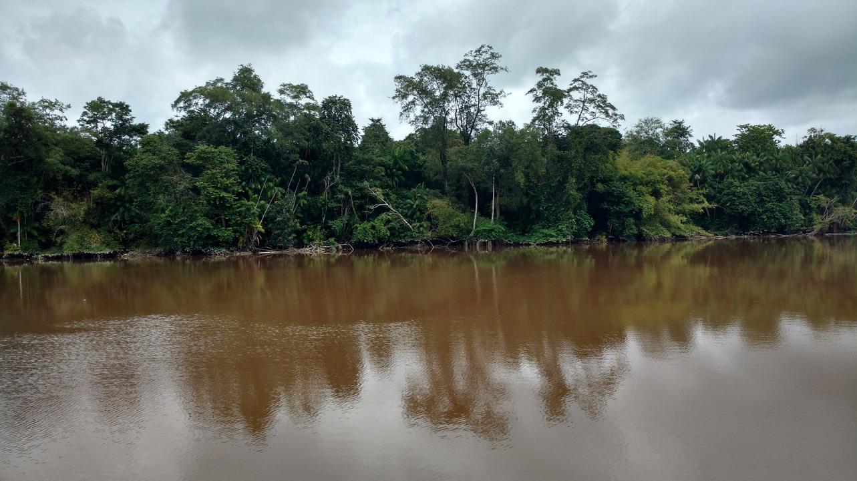 03. En remontant le Suriname