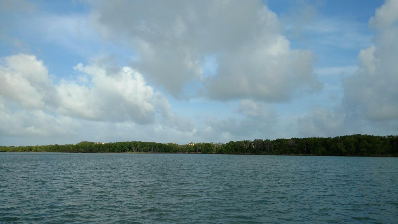 07. Lençóis, la mangrove