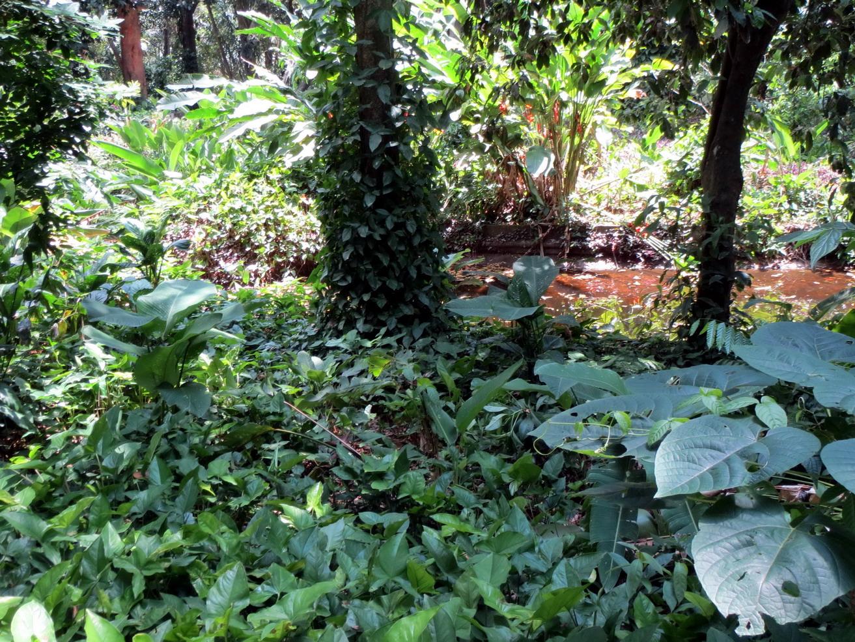 08. Le jardin botanique