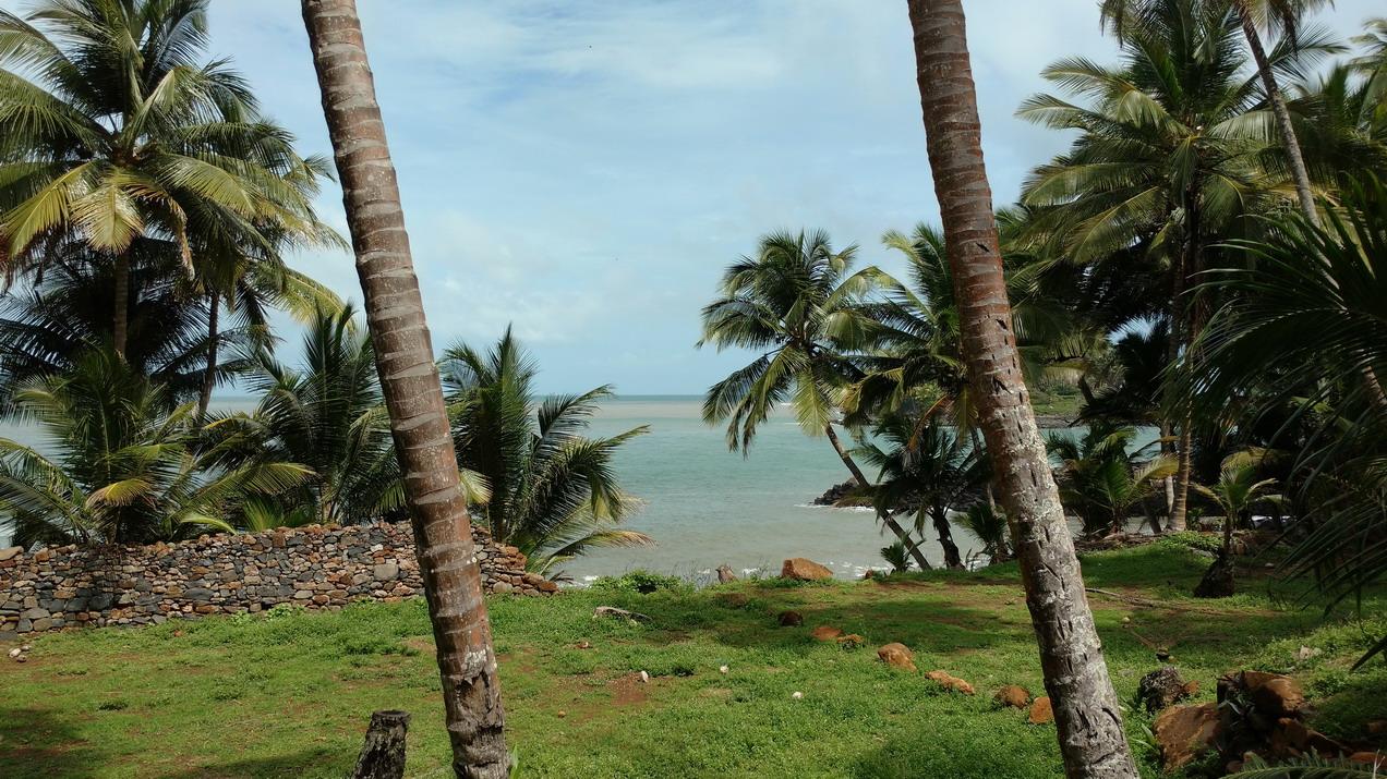 11. Promenade sur l'île Royale
