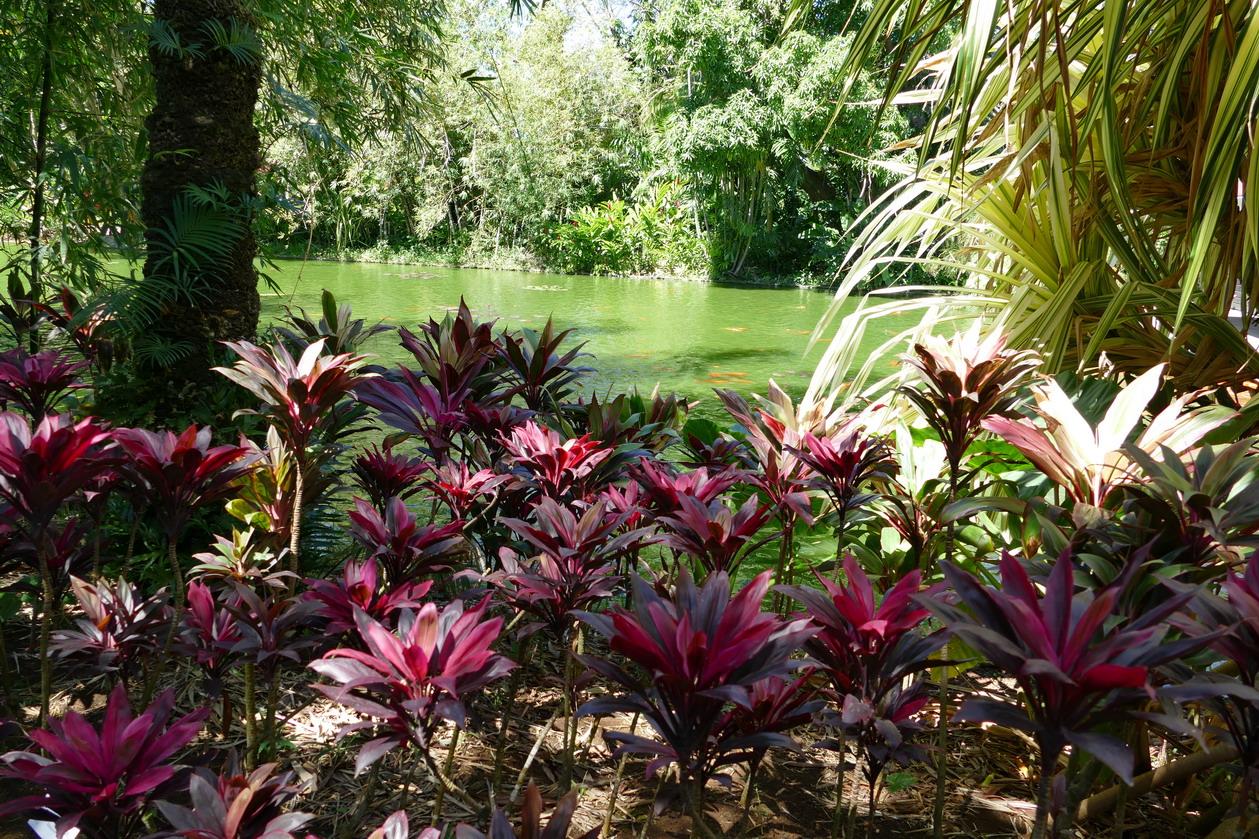 13. La Guadeloupe ; Deshaies, le jardin botanique