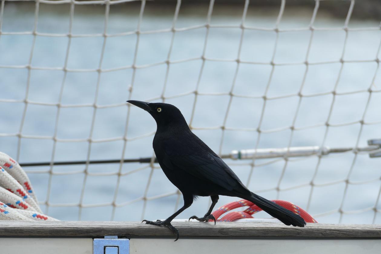 16. Les Tobago cays, un visiteur