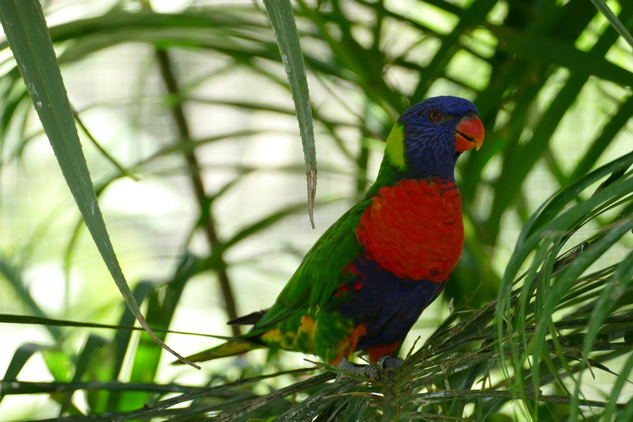18. La Guadeloupe ; Deshaies, le jardin botanique