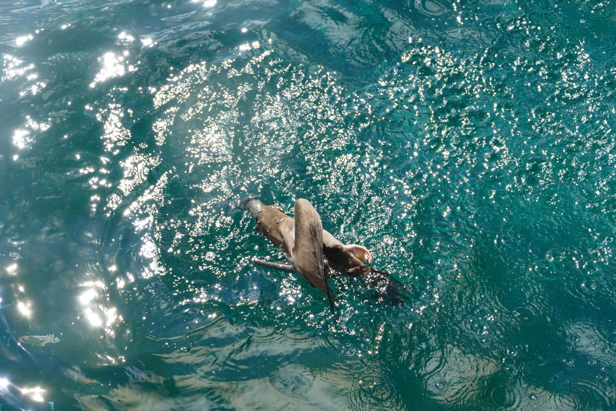 19. Plongeon en piquet