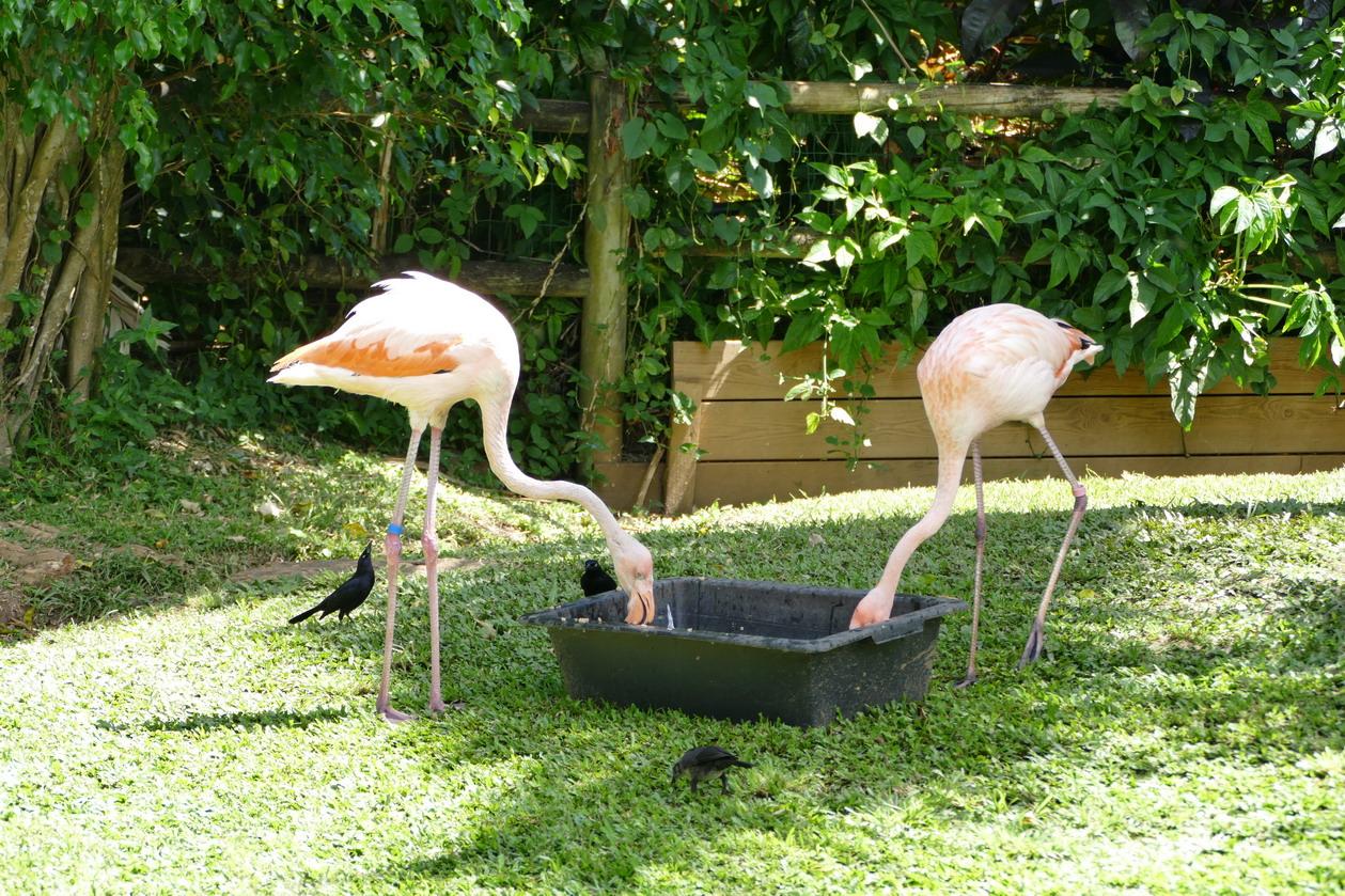 21. La Guadeloupe ; Deshaies, le jardin botanique