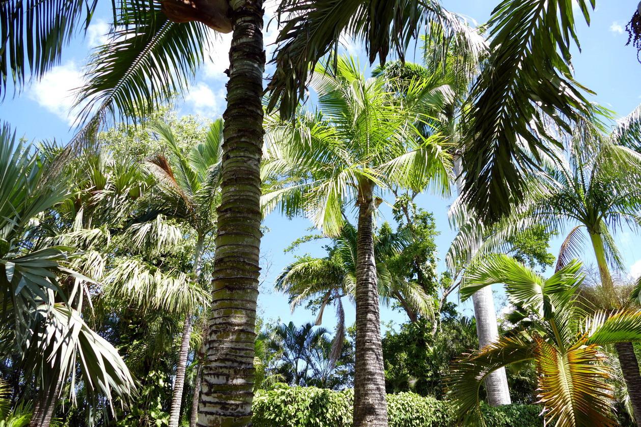 23. La Guadeloupe ; Deshaies, le jardin botanique
