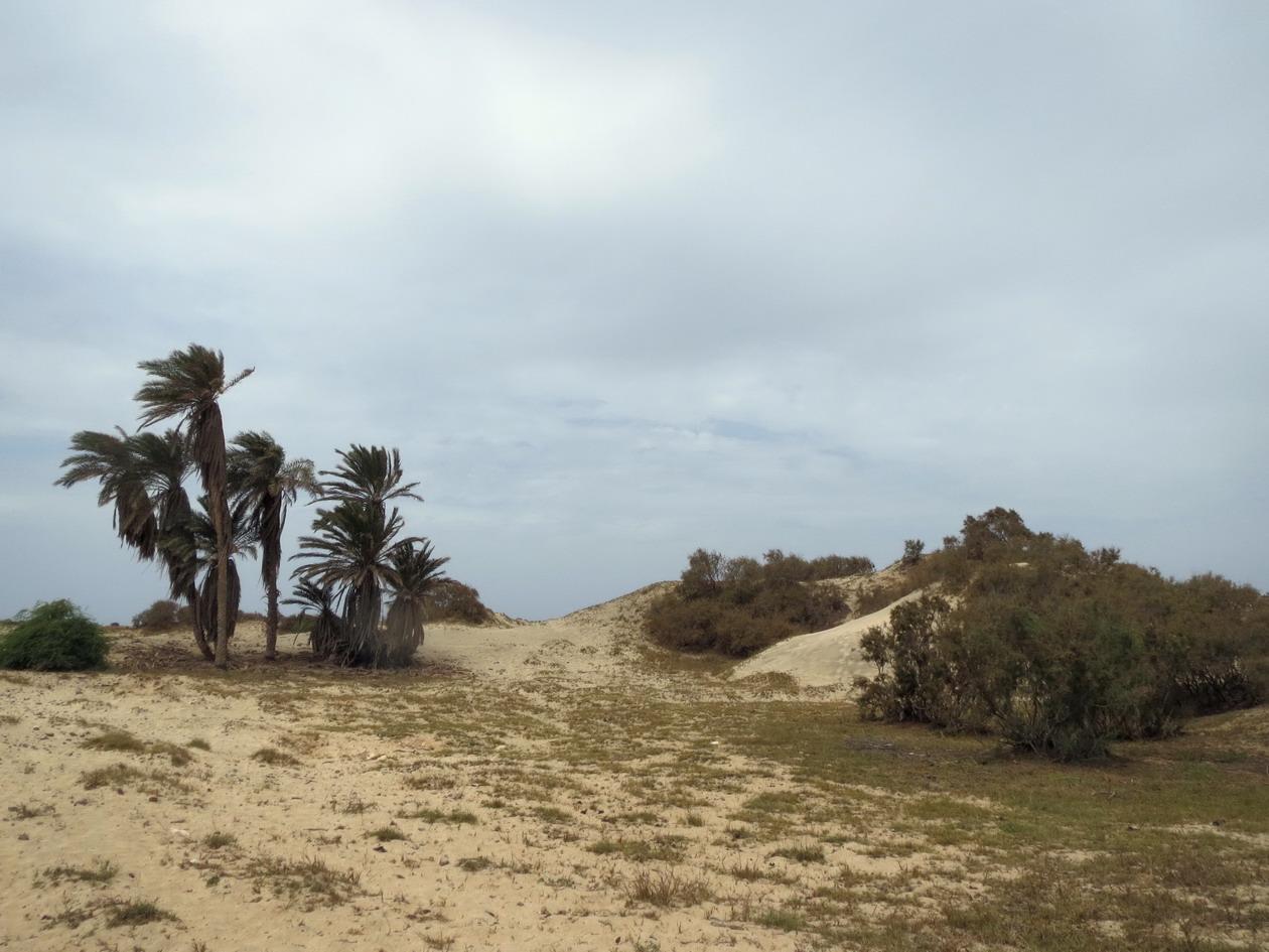 24. Les dunes du nord