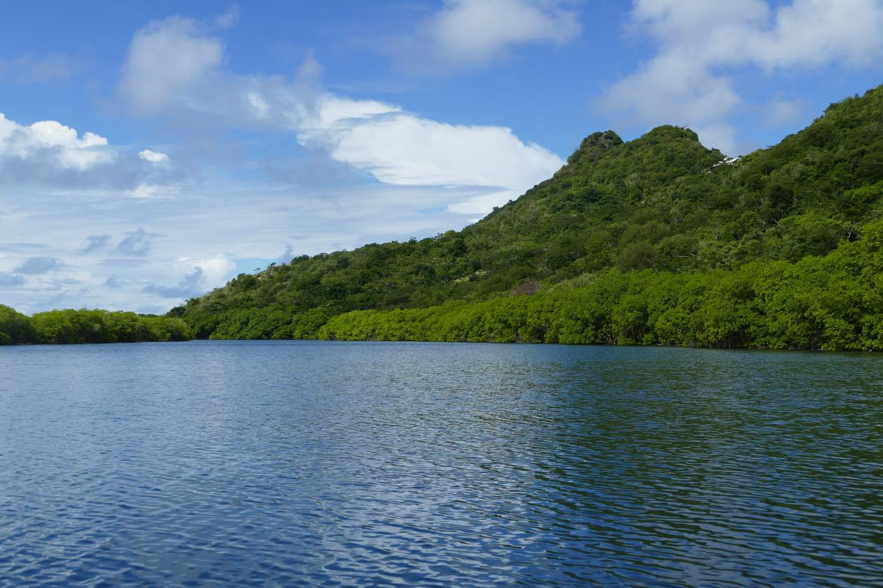 24. Mangrove et trou à cyclone