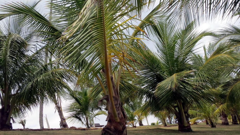 28. Baia de Todos os Santos, île de Prades