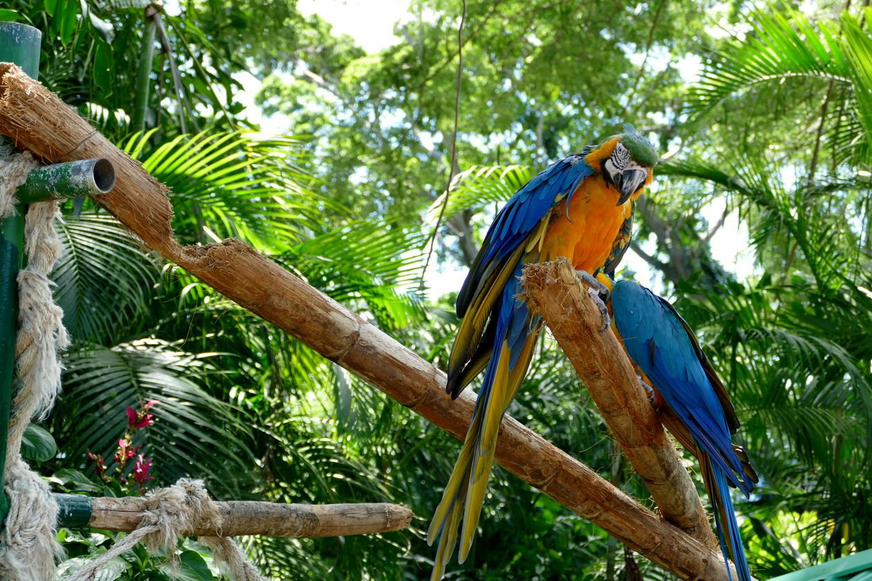 30. La Guadeloupe ; Deshaies, le jardin botanique