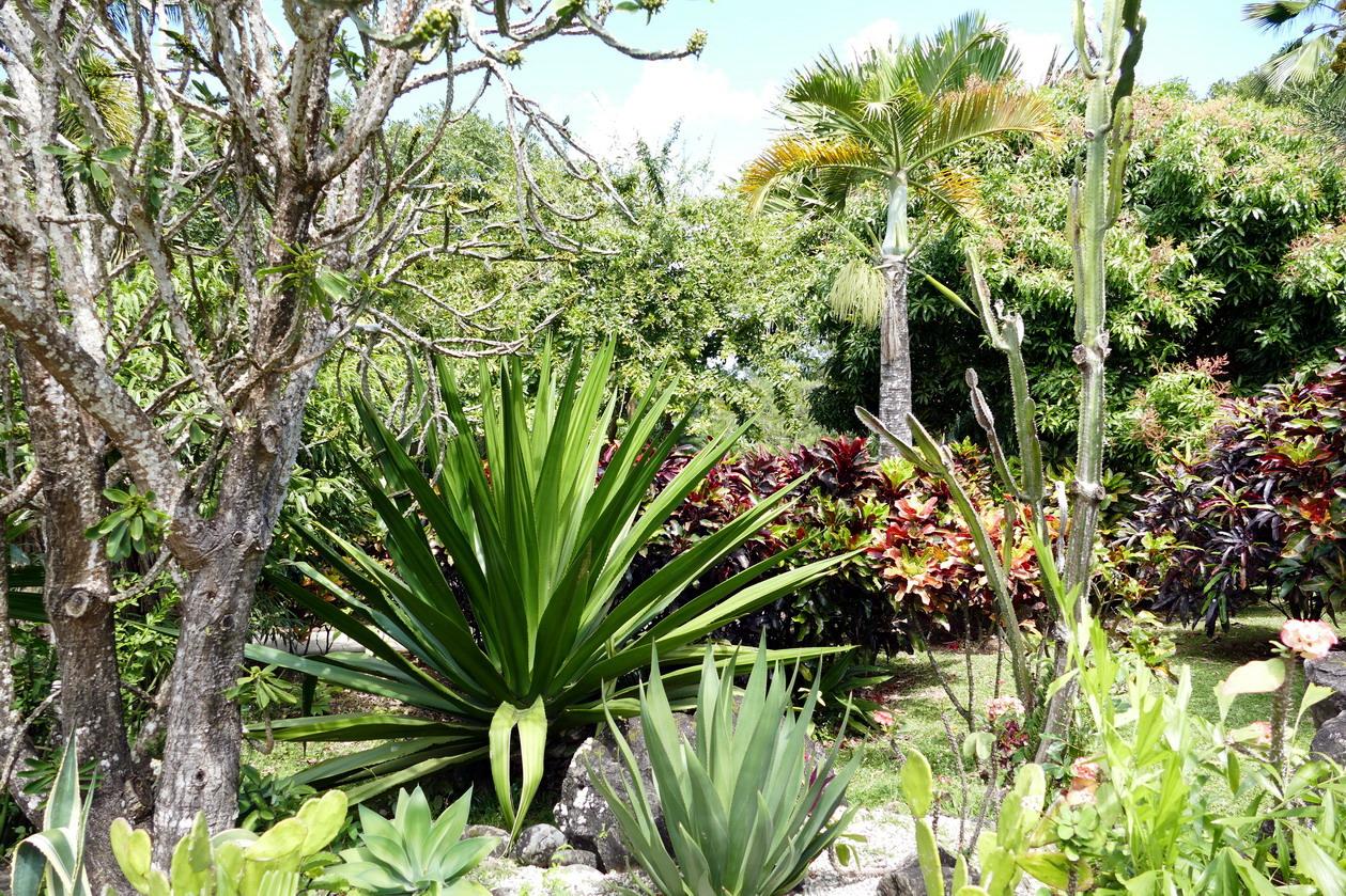 34. La Guadeloupe ; Deshaies, le jardin botanique