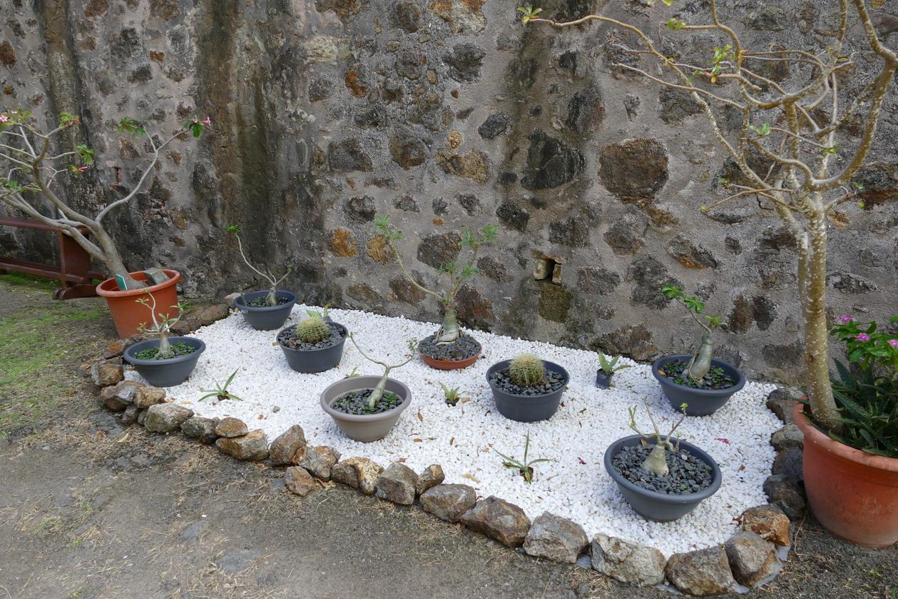 35. L'archipel des Saintes ; le fort Napoléon, jardin botanique en projet
