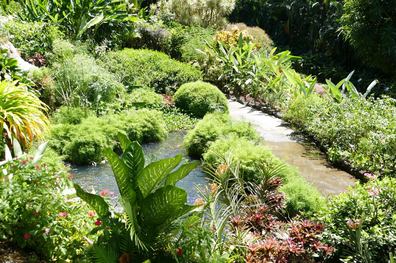 36. La Guadeloupe ; Deshaies, le jardin botanique