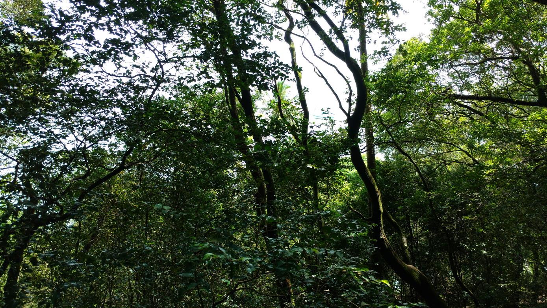 37. Île St Joseph, la forêt primitive