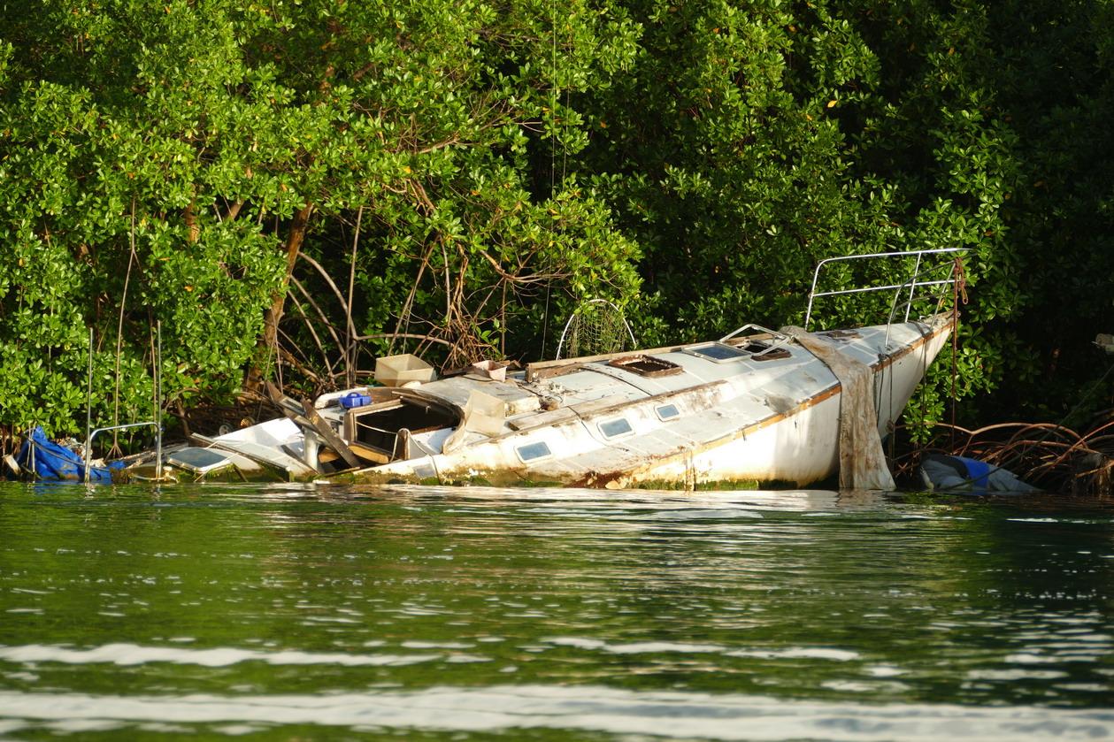 39. La Martinique, le Marin ; la mangrove enlace et engloutit