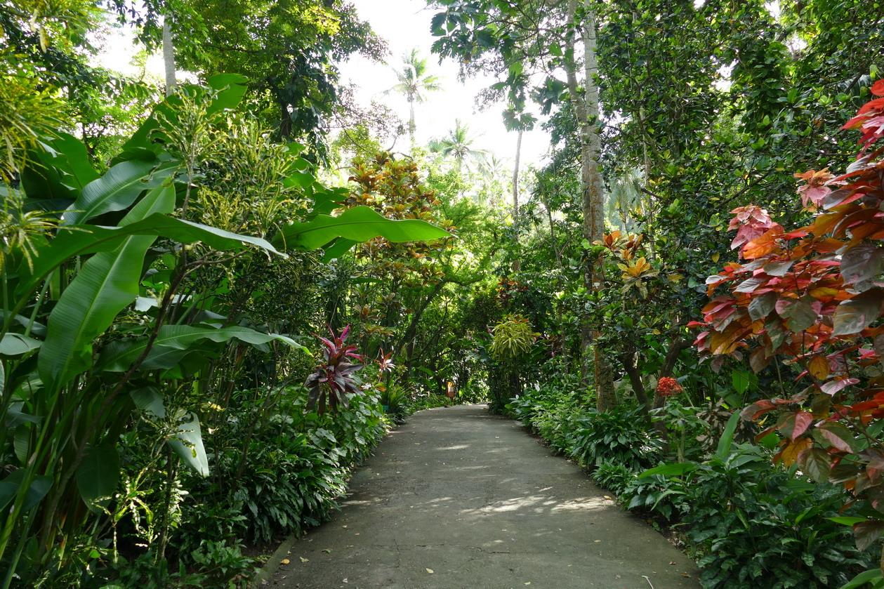 40. Soufriere, le jardin botanique