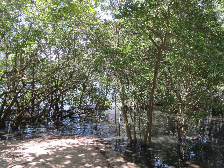 42. Lagoa, le lac intérieur