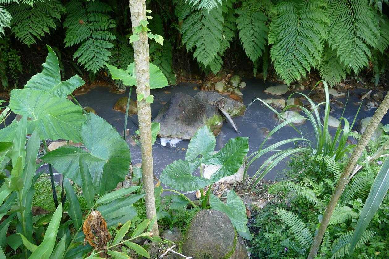 44. Soufriere, le jardin botanique