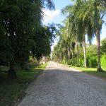 50. Recife, Instituto Ricardo Brennand, la longue allée de palmiers