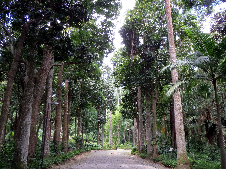 1. Jardin botanique de Rio