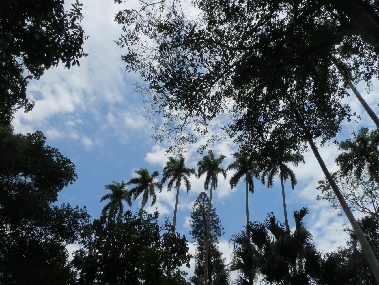 2. Le jardin botanique