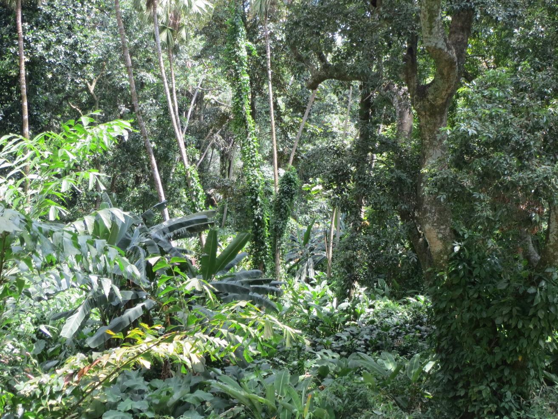 04. Le jardin botanique