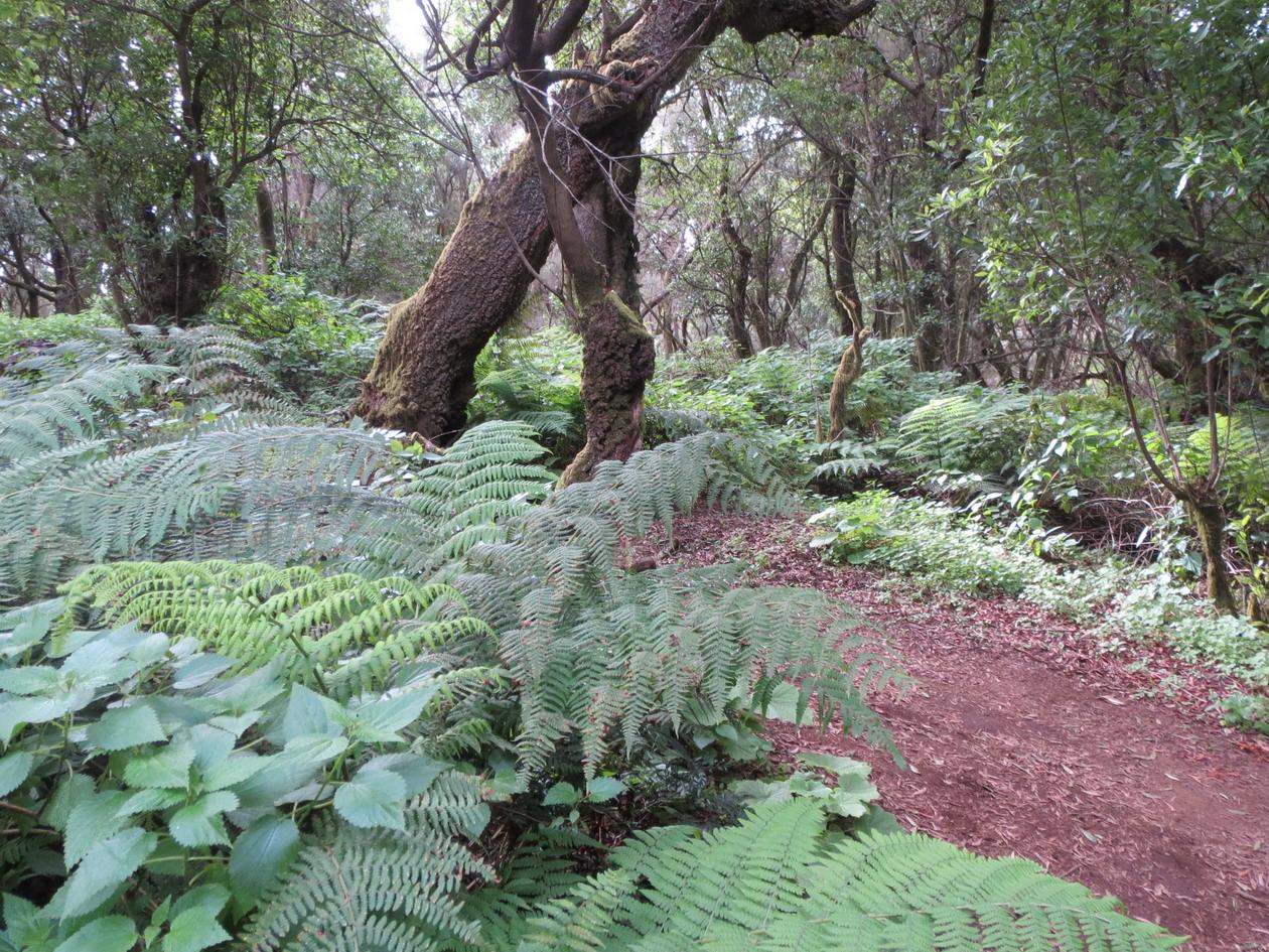 12. Forêt primitive