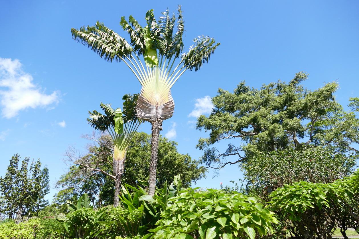 14. La Guadeloupe ; Deshaies, le jardin botanique