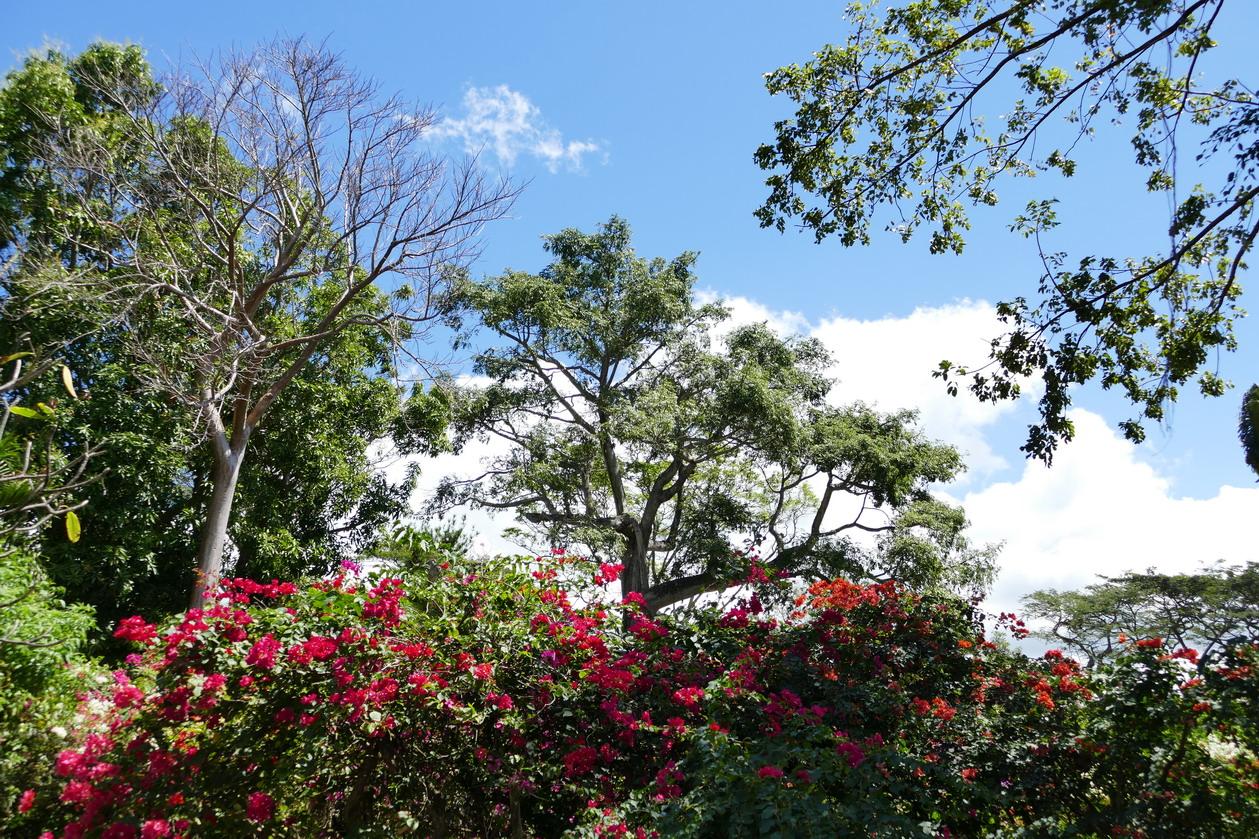 15. La Guadeloupe ; Deshaies, le jardin botanique