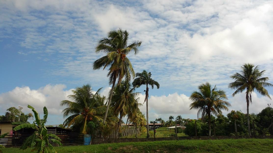 16. Sur la route de Paramaribo