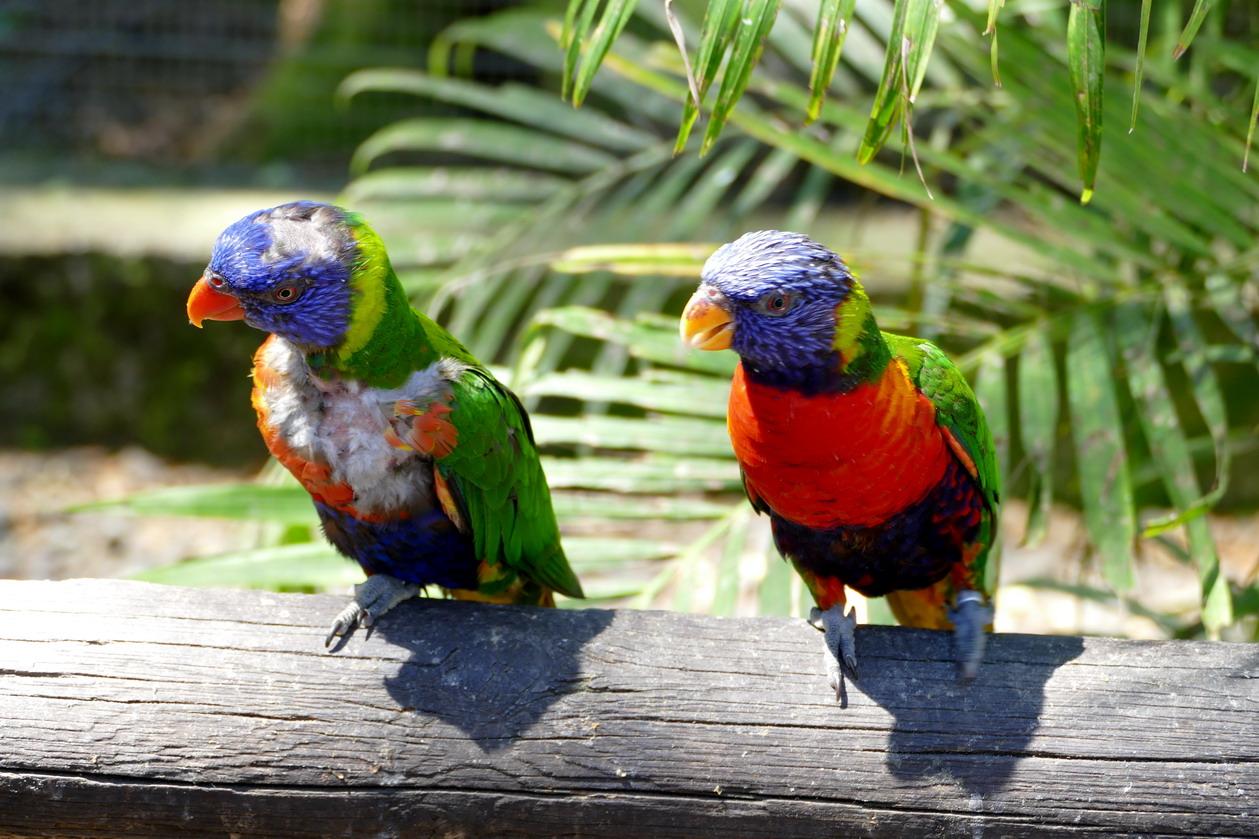 17. La Guadeloupe ; Deshaies, le jardin botanique