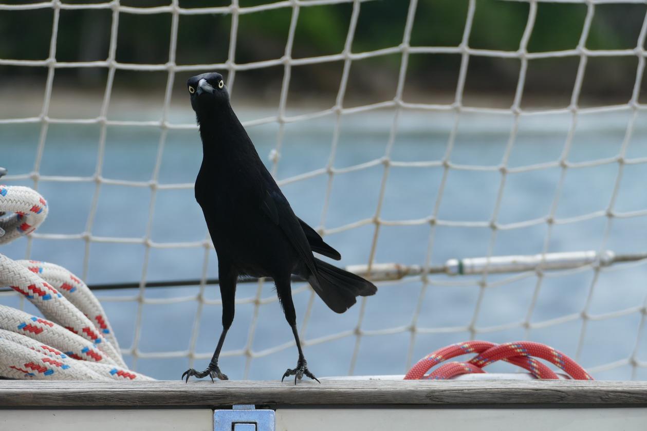 17. Les Tobago cays, un visiteur