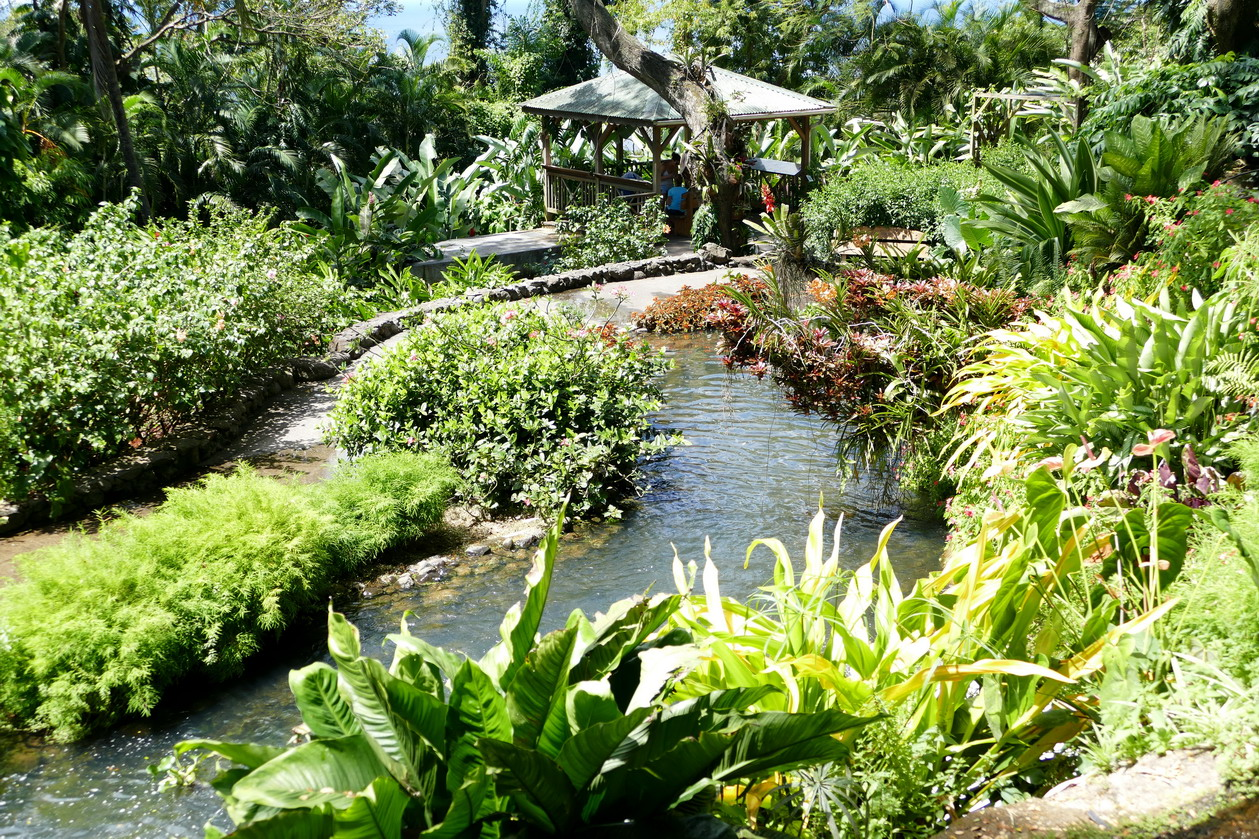 22. La Guadeloupe ; Deshaies, le jardin botanique
