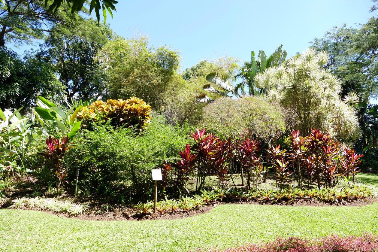 24. La Guadeloupe ; Deshaies, le jardin botanique