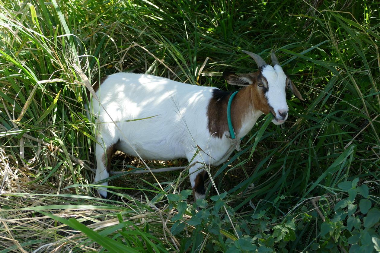 24. Une des résidentes vaque à ses occupations