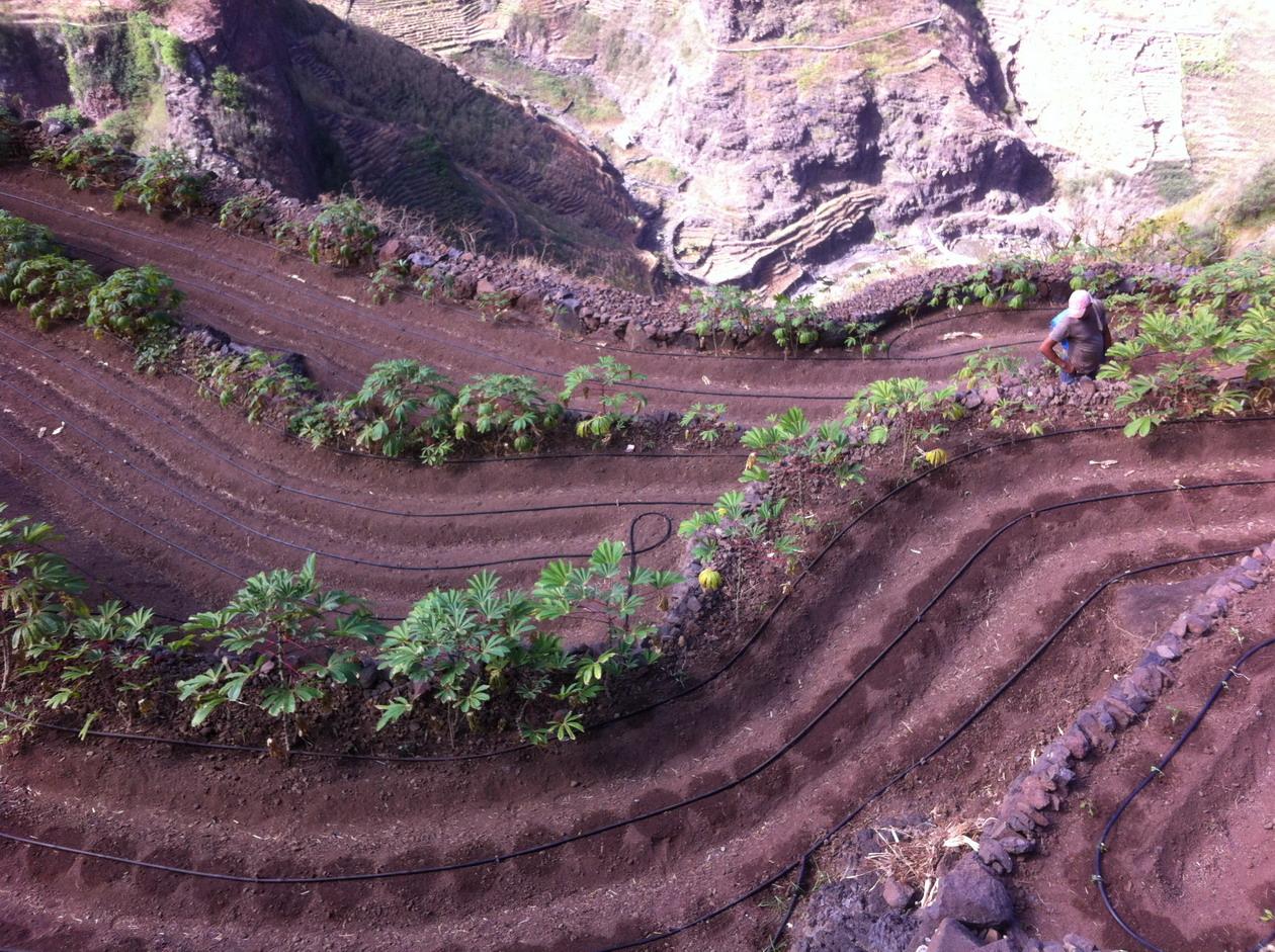 25. Culture de manioc