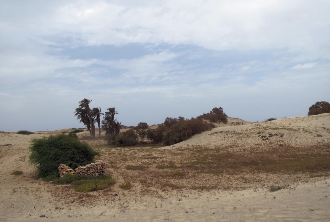 25. Les dunes du nord