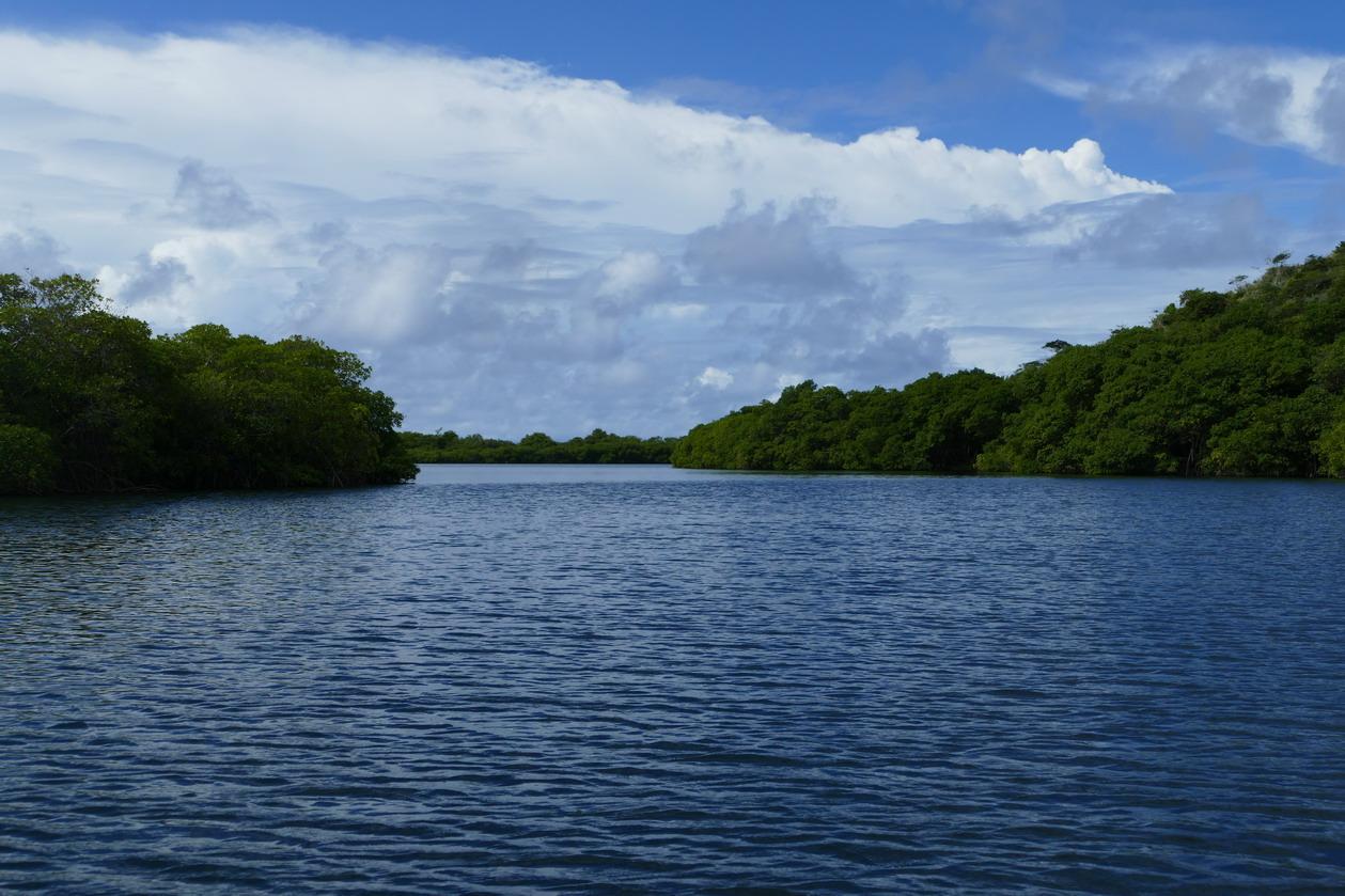 27. Mangrove et trou à cyclone