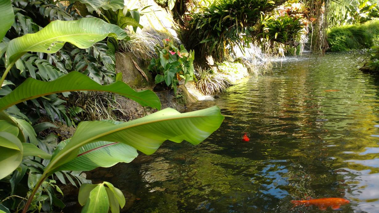 29. Deshaies, le jardin botanique