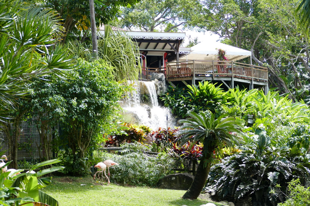 32. La Guadeloupe ; Deshaies, le jardin botanique
