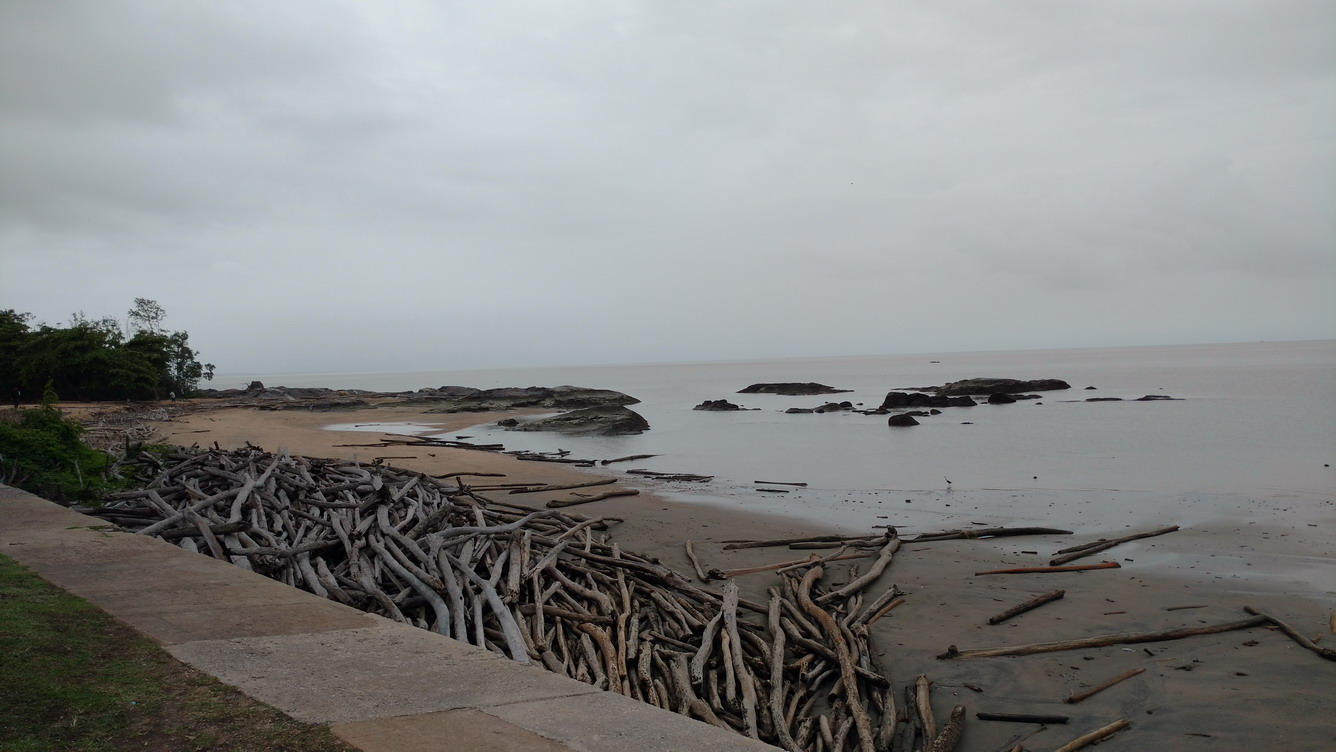 33. Cayenne, des tonnes de bois de la forêt primitive échoué