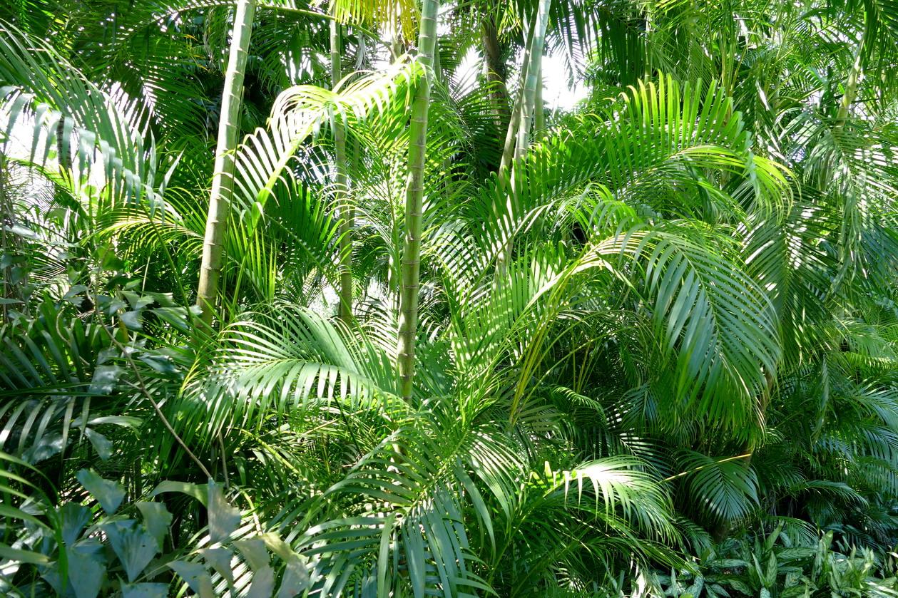33. La Guadeloupe ; Deshaies, le jardin botanique
