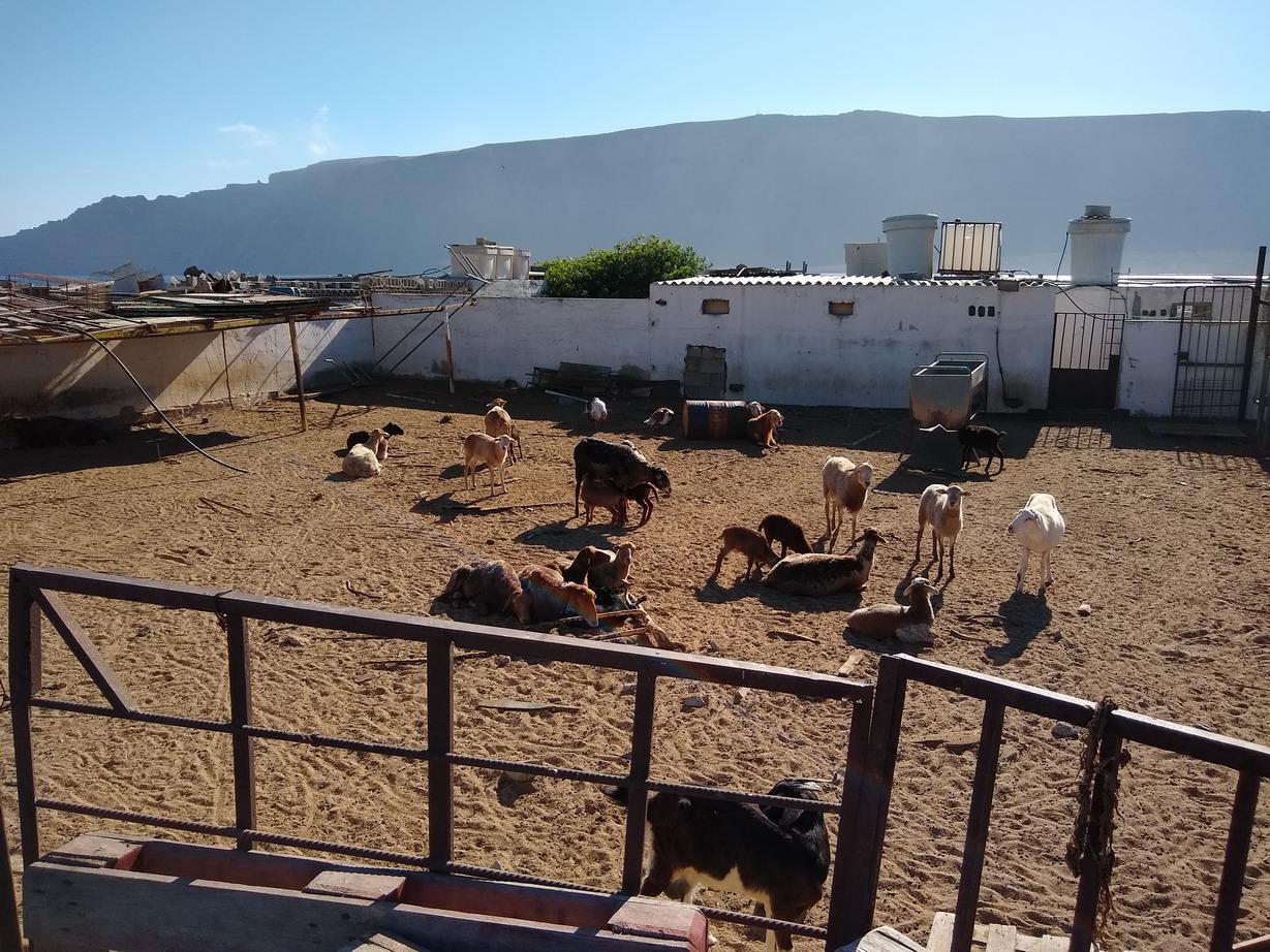 34. La Graciosa - une ferme au centre de l'île