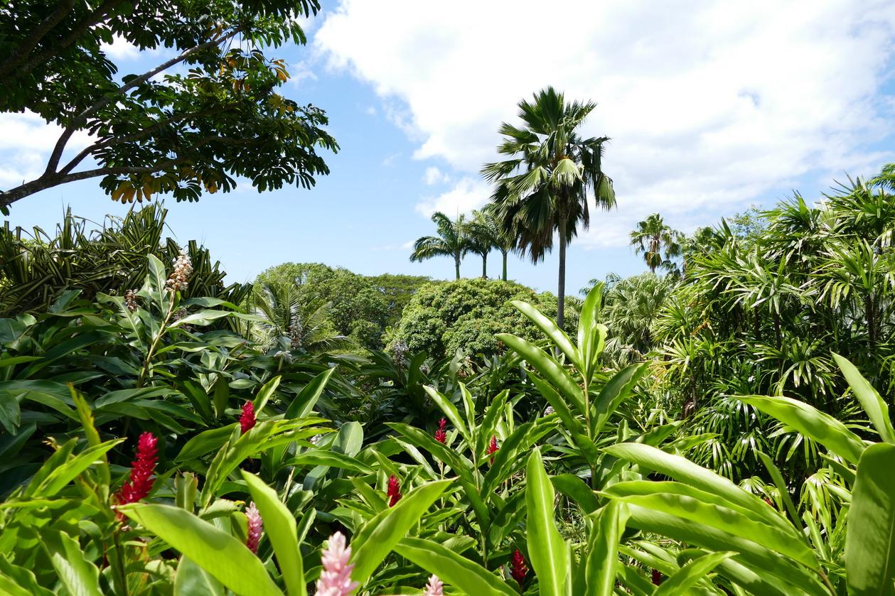 35. La Guadeloupe ; Deshaies, le jardin botanique