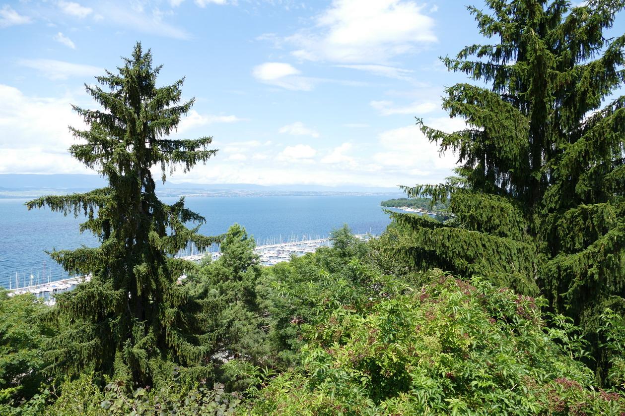 37. Lac Léman - Thonon-les-Bains, le port de plaisance occupe tout l'espace