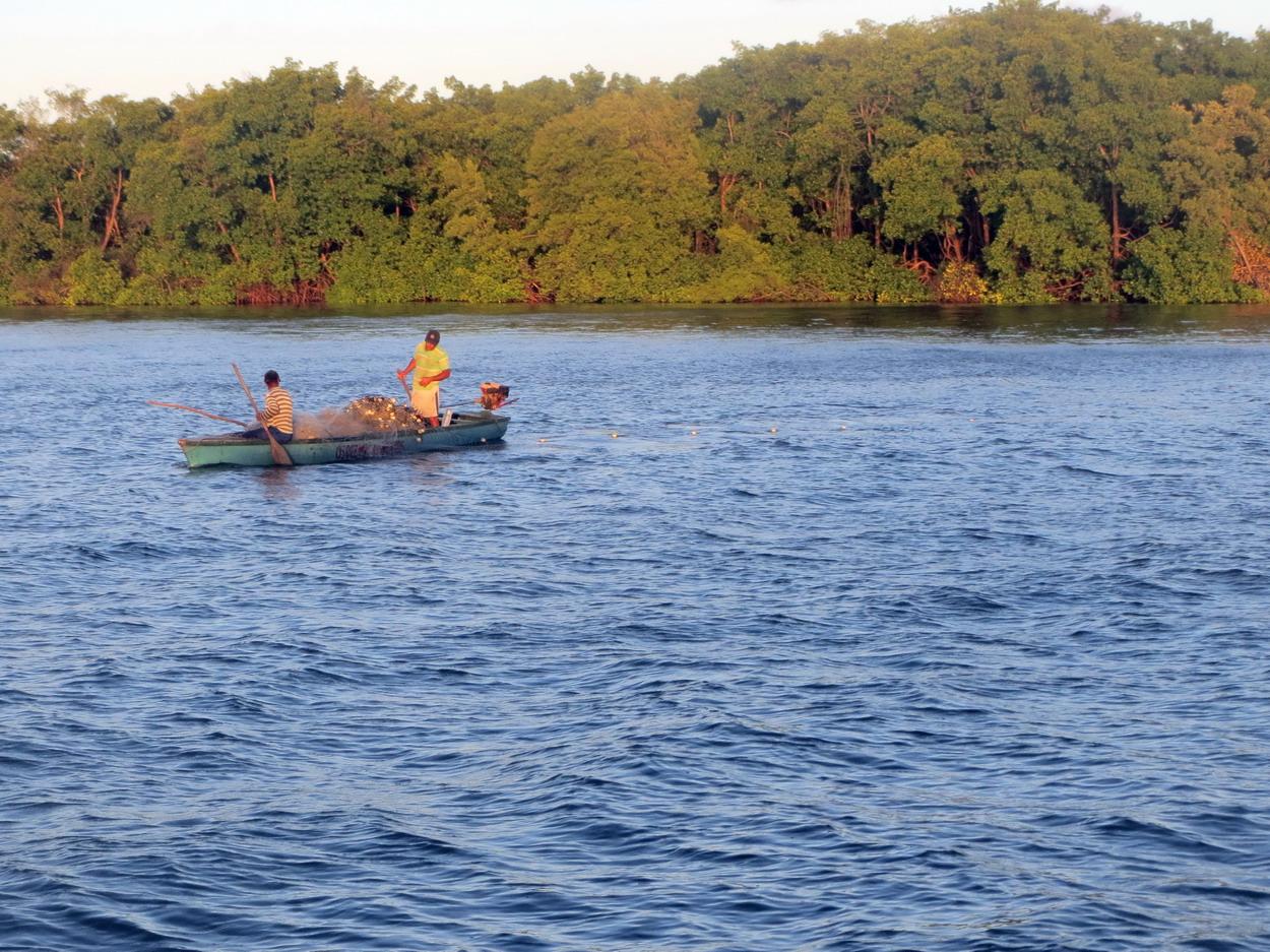 4. La mangrove