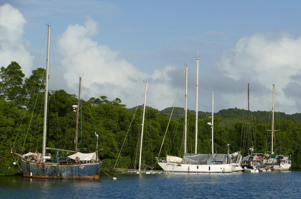 40. La Martinique, le Marin ; le nez dans la mangrove