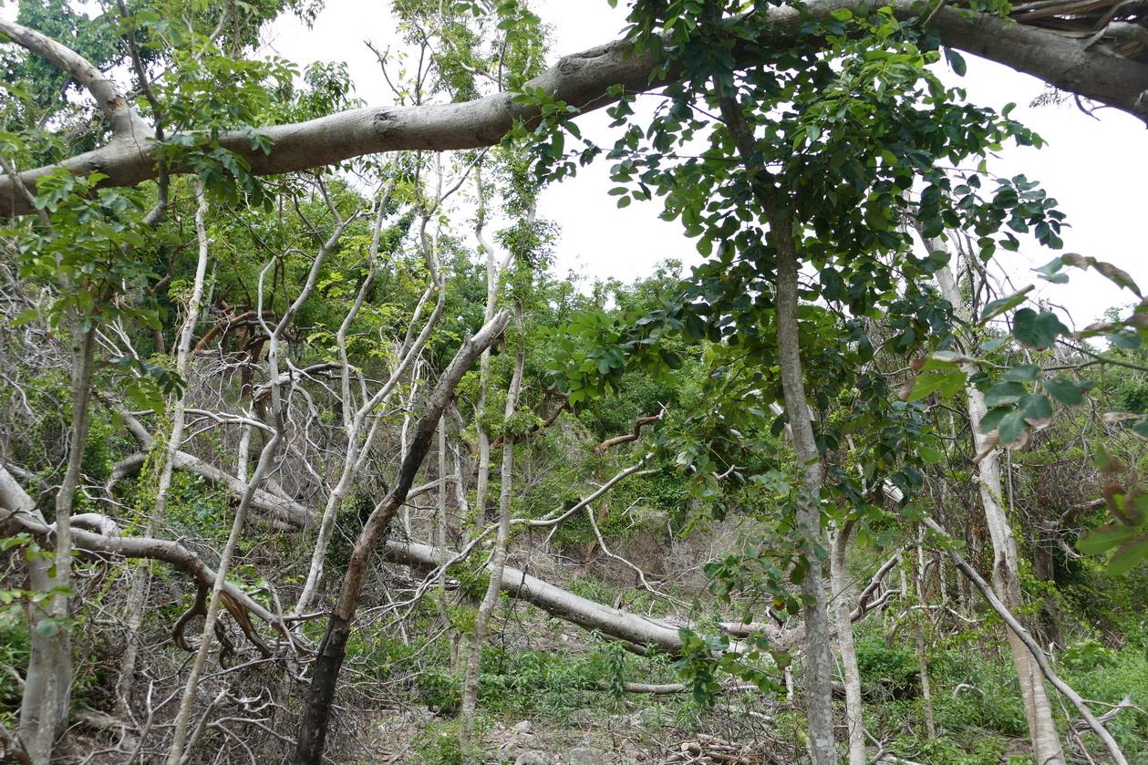 41. L'archipel des Saintes ; l'anse Crawen, les dégâts du cyclone Maria