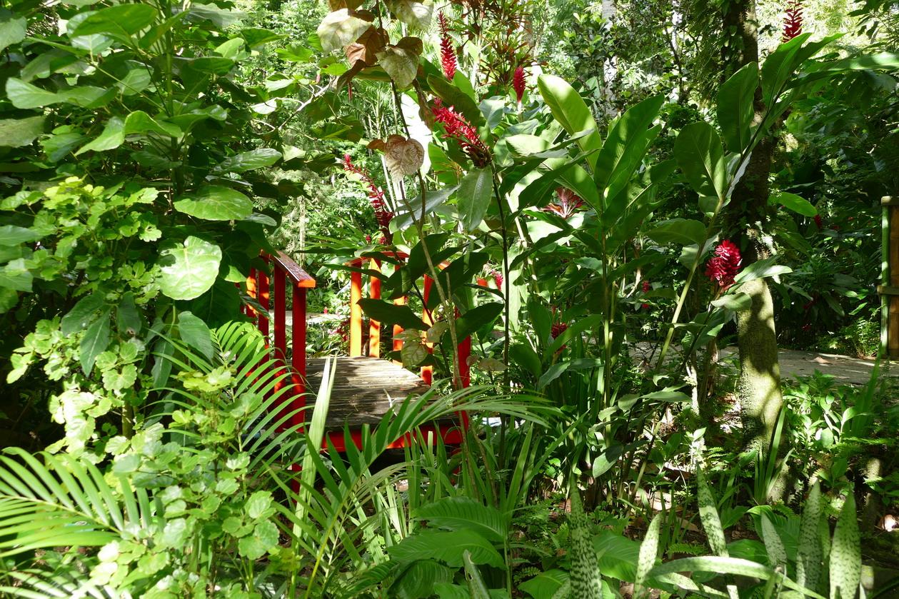 41. Soufriere, le jardin botanique