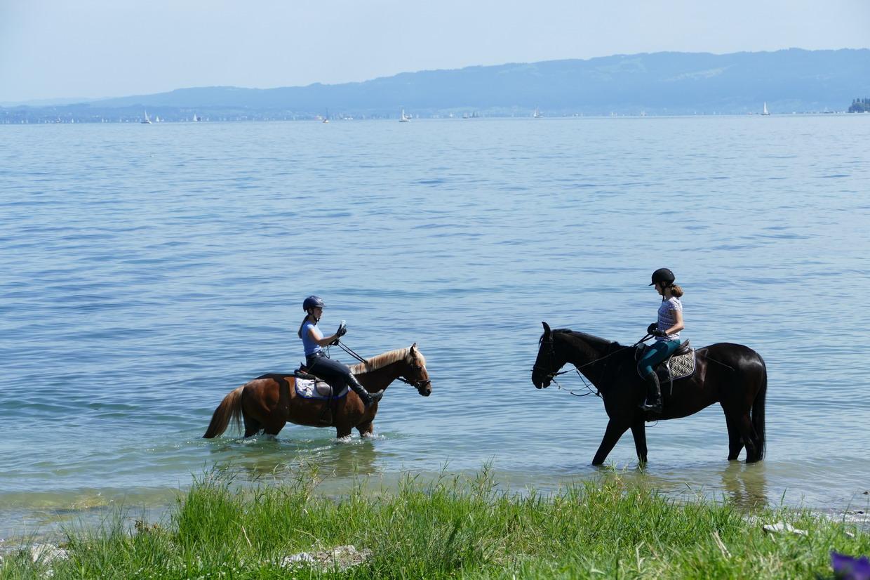 42. Le lac de Constance - rive sud
